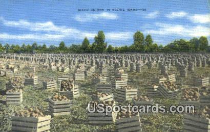 Idaho Onions - Misc Postcard