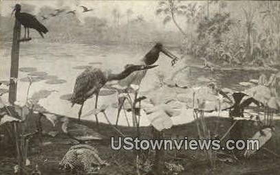 Group of Jabiru and Sun-bittern - Chicago, Illinois IL Postcard