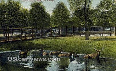 Deer, Lincoln Park Zoo - Chicago, Illinois IL Postcard