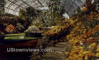 Chrysanthemum Flower, Garfield Park - Chicago, Illinois IL Postcard