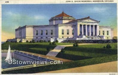 John G Shedd Memorial Aquarium - Chicago, Illinois IL Postcard