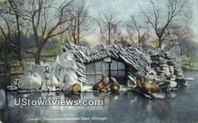 Lincoln Park, Sea Lions & Cave - Chicago, Illinois IL Postcard