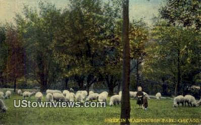 Sheep, Washington Park - Chicago, Illinois IL Postcard