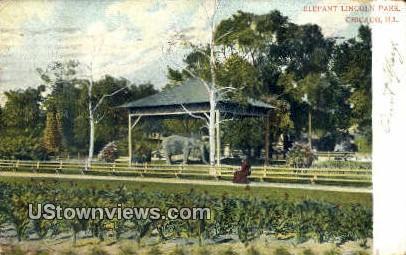 Elephant, Lincoln Park - Chicago, Illinois IL Postcard