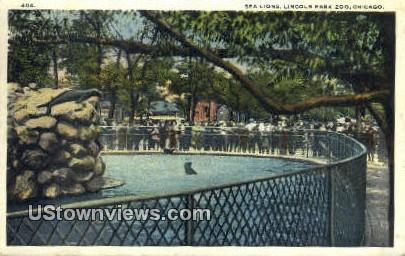Sea Lions, Lincoln Park Zoo - Chicago, Illinois IL Postcard