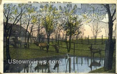 Elks, Lincoln Park Zoo - Chicago, Illinois IL Postcard