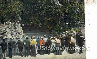 Seal Pond Lincoln Park - Chicago, Illinois IL Postcard