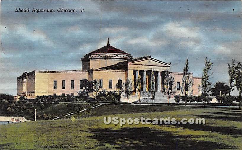 Shedd Aquarium - Chicago, Illinois IL Postcard