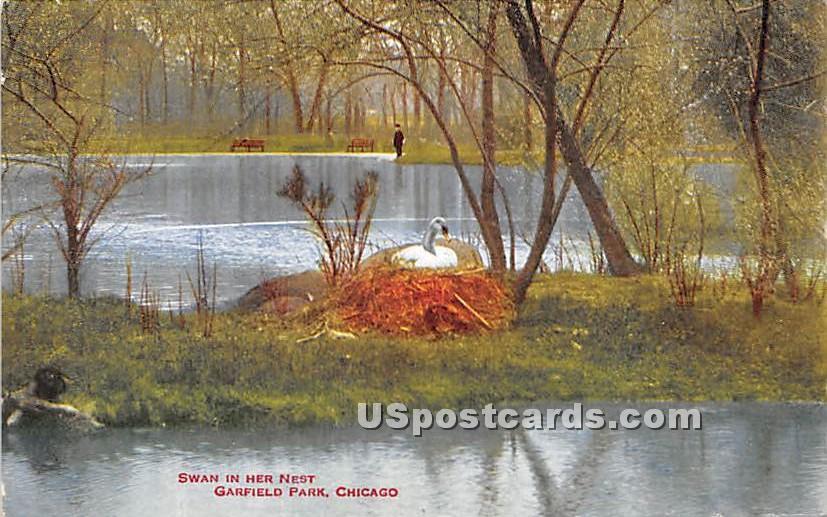 Swan in her Nest, Garfield Park - Chicago, Illinois IL Postcard
