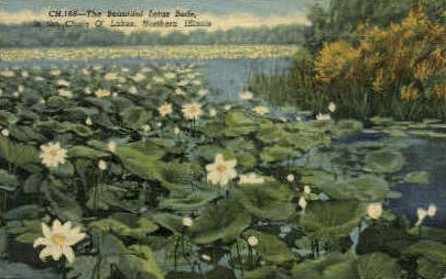 The Lotus Beds - Misc, Illinois IL Postcard