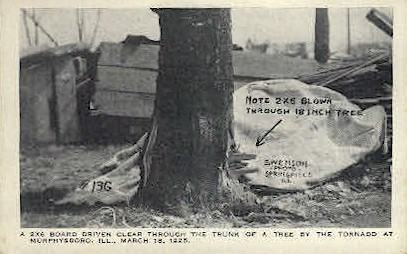 2x6 Through a Tree - Murphysboro, Illinois IL Postcard