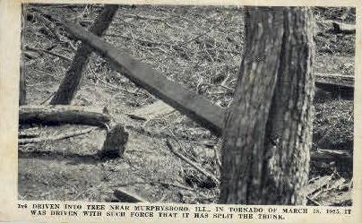 3x6 Through Tree - Murphysboro, Illinois IL Postcard