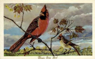 Illinois State Bird - Misc Postcard