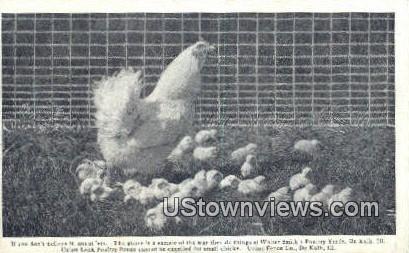 Union Lock Poultry Fence - DeKalb, Illinois IL Postcard