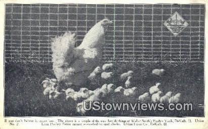 Lock Poultry Fence - DeKalb, Illinois IL Postcard