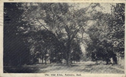 The Old Elm - Auburn, Indiana IN Postcard