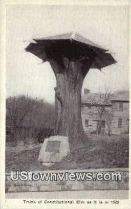 Constitutional Elm, 1929 - Misc, Indiana IN Postcard
