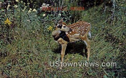 Spotted Fawn - Misc, Indiana IN Postcard
