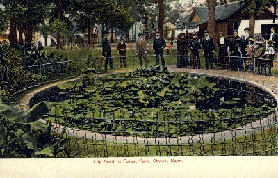 Lily Pond, Forest Park - Ottawa, Kansas KS Postcard