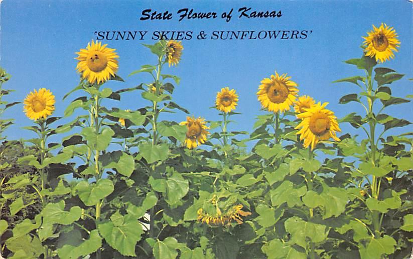 Kansas State Flower KS