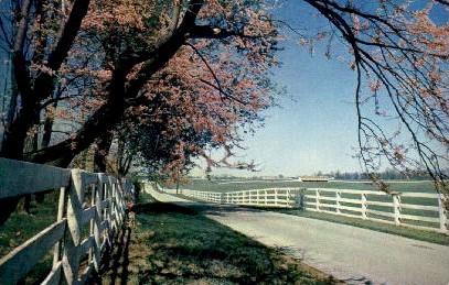 Picturesque Horse Farm - Lexington, Kentucky KY Postcard