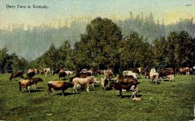 Dairy Farm - Lexington, Kentucky KY Postcard