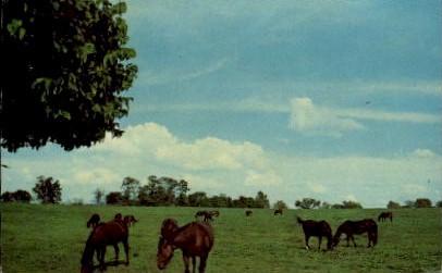 Castleton Farm Iron Works Pike - Lexington, Kentucky KY Postcard