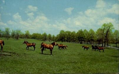 Blue Grass - Lexington, Kentucky KY Postcard