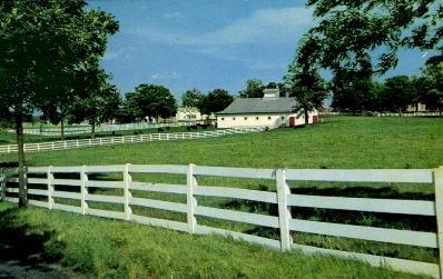 Horse Farm - Lexington, Kentucky KY Postcard