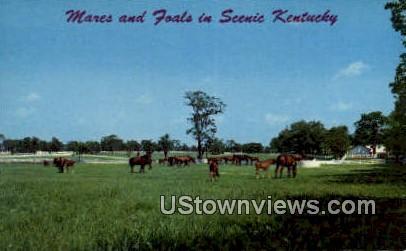 Mares And Colts - Lexington, Kentucky KY Postcard
