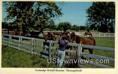 Blue Grass Horse Farm - Lexington, Kentucky KY Postcard