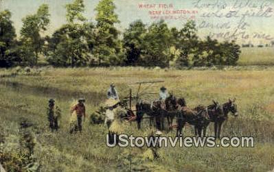 Wheat Field - Lexington, Kentucky KY Postcard