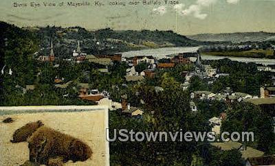 Buffalo Trace - Maysville, Kentucky KY Postcard