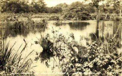 Real Photo, Jungle Garden - New Iberia, Louisiana LA Postcard