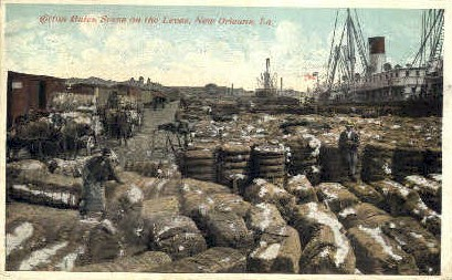The Levee - New Orleans, Louisiana LA Postcard
