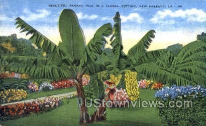 Banana tree - New Orleans, Louisiana LA Postcard