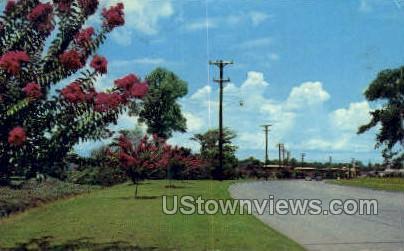 Street scene - Shreveport, Louisiana LA Postcard