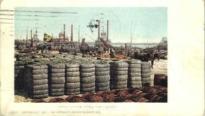 Cotton on the Levee  - New Orleans, Louisiana LA Postcard