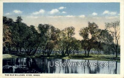 The Old Willows - Ayer, Massachusetts MA Postcard