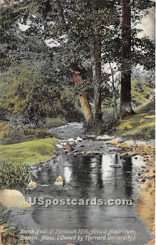 Brook, foot of Hemlock Hill, Arnold Arboetum - Boston, Massachusetts MA Postcard