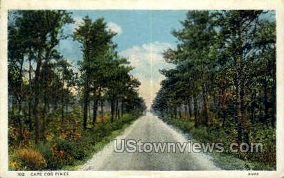 Pines - Cape Cod, Massachusetts MA Postcard