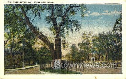 The Washington Elm - Cambridge, Massachusetts MA Postcard