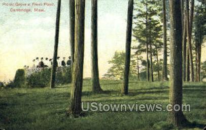 Picnic Grove - Cambridge, Massachusetts MA Postcard