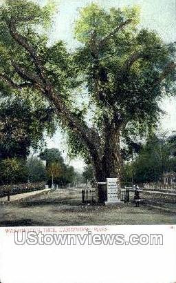 Washington Elm - Cambridge, Massachusetts MA Postcard