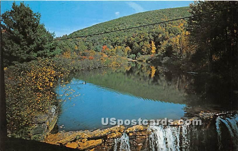 Lone Wild Duck - Charlemont, Massachusetts MA Postcard