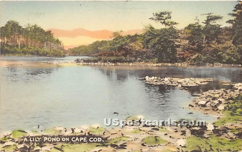 A Lily Pond - Craigville, Massachusetts MA Postcard