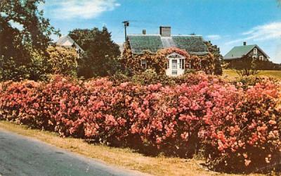 A Rose Covered Cottage Chatham, Massachusetts Postcard
