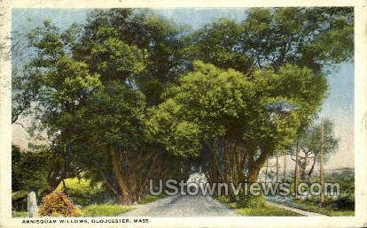Annisquam Willows - Gloucester, Massachusetts MA Postcard