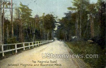 Magnolia Road - Gloucester, Massachusetts MA Postcard