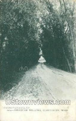 Amesquam Willows - Gloucester, Massachusetts MA Postcard